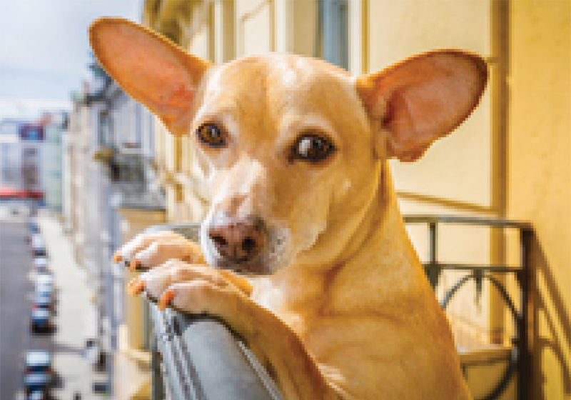 Can I have pets in a residential complex?