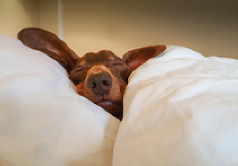 Your website of the month: how to sleep like a boss